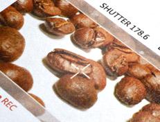 Custom Coffee Bags